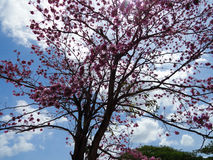 Fleurs de ciel Image libre de droits