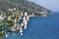 Fleurs de Cinque Terre Photos libres de droits