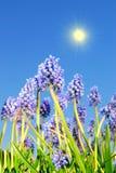 Fleurs de cloche bleues Image libre de droits