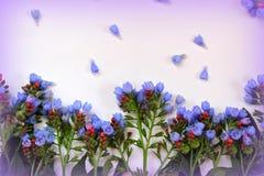 Fleurs de cloches bleues Photos stock