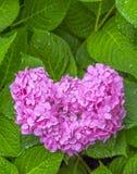 Fleurs de coeur Photographie stock libre de droits