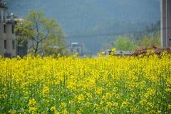Fleurs de Cole Photos stock