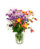 Fleurs de Columbine de différentes couleurs Images libres de droits