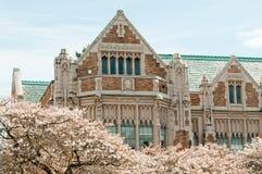 Fleurs de construction et de cerise d'université Photographie stock libre de droits