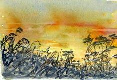 Fleurs de coucher du soleil Photographie stock