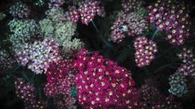 Fleurs de couleur de vallée Images stock