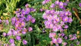 Fleurs de coupeur Image stock