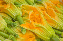 Fleurs de courge, marché d'agriculteurs Photos stock