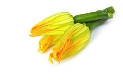 Fleurs de courgette Photographie stock libre de droits