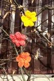 Fleurs de crochet dans une barrière Images stock