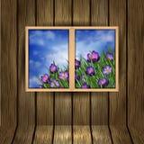 Fleurs de crocus en dehors de la fenêtre Image stock