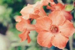 Fleurs de cru Image stock