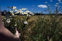 Fleurs de cueillette Photos stock