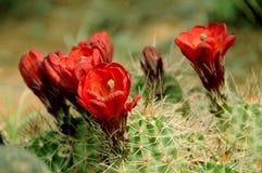 Fleurs de désert Image libre de droits