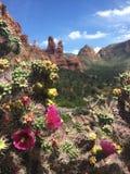 Fleurs de désert Photographie stock