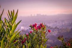 Fleurs de désert donnant sur Los Angeles Images libres de droits