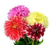 fleurs de dahlia de fond Photographie stock libre de droits