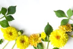 Fleurs de dahlia et feuilles jaunes de vert pour un espace vide Images stock