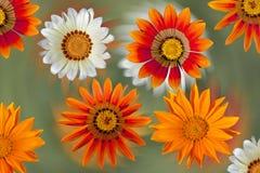 Fleurs de dahlia sur le fond coloré photo stock