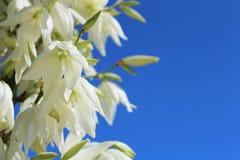 Fleurs de delphinium Photos libres de droits