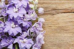 Fleurs de delphinium Image libre de droits