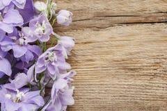 Fleurs de delphinium Images libres de droits