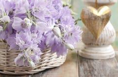 Fleurs de delphinium Photographie stock libre de droits