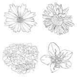 Fleurs de dessin de vecteur Photographie stock