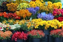 Fleurs de diversité images stock