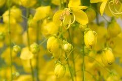 Fleurs de douche d'or Photos libres de droits