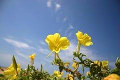Fleurs de dune Photographie stock