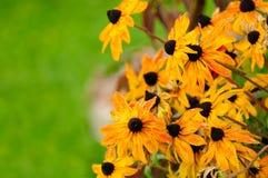 Fleurs de effacement d'automne Images libres de droits