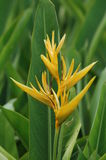 Fleurs de faune Photo libre de droits