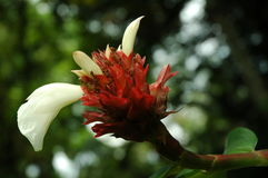 Fleurs de faune Photographie stock