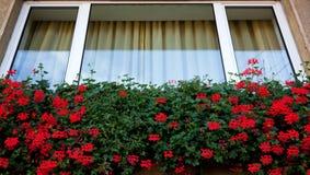 Fleurs de fenêtre Photographie stock libre de droits
