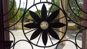 Fleurs de fer qui sont belles, durable photos stock