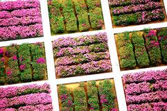 fleurs de ferme images stock
