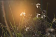 Fleurs de fin d'herbe vers le haut de tir Photo stock
