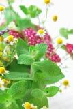 Fleurs de fines herbes images stock