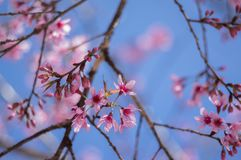 Fleurs de fleur avec un ciel bleu images libres de droits
