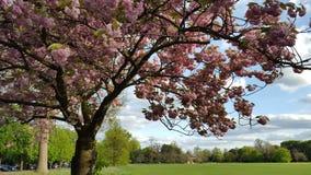 Fleurs de fleurs en parc Photos stock