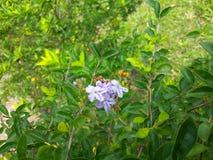 Fleurs de floraison photos stock