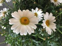 Fleurs de floraison Photos libres de droits