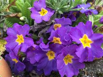 Fleurs de floraison Photographie stock