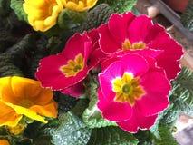 Fleurs de floraison Images libres de droits