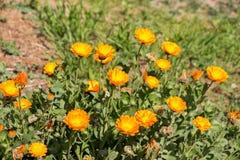Fleurs de floraison comme fond Photo libre de droits