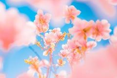 Fleurs de floraison d'été magnifique de ressort, fond inspiré de nature photo stock