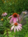 Fleurs de floraison dans le jardin Image stock
