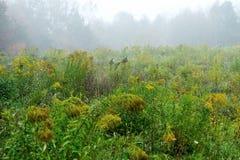 Fleurs de floraison dans le jour d'automne Images libres de droits
