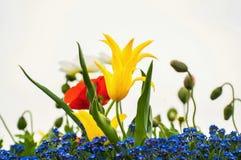 Fleurs de floraison de source Photo libre de droits